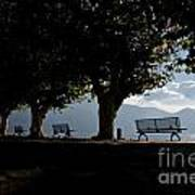 Trees And Benches Art Print