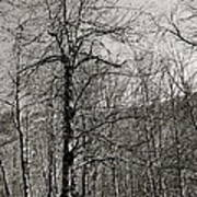 Trees And Hillside Art Print