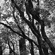 Trees Beautiful Trees Art Print