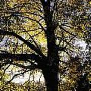 Trees During Autumn Art Print