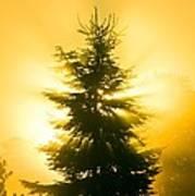 Trees In Fog At Sunrise Art Print