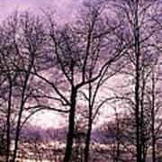 Trees In Glorious Calm Art Print