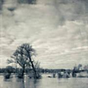 Trees In River Rhine Art Print