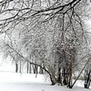 Trees In Snow Art Print