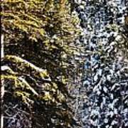 Trees In Taos Village Art Print