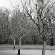 Trees In The Mist 2 Art Print