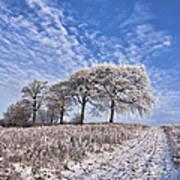 Trees In The Snow Art Print by John Farnan