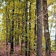 Trees Of Golden Hues Art Print