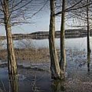 Trees On Flooded Riverbank No.1001 Art Print