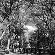Trees On The Mall In Central Park In Black And White Art Print