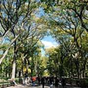 Trees On The Mall In Central Park Art Print