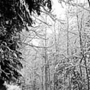 Trees Under The Snow Art Print