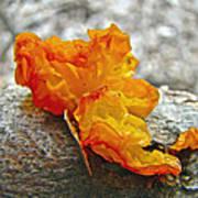 Tremella Mesenterica - Orange Brain Fungus Art Print