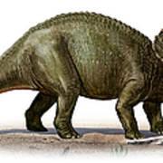 Triceratops Prorsus, A Prehistoric Era Art Print