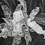 Triple Orchid Blossom Art Print by Estephy Sabin Figueroa