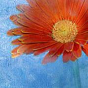 Triptych Gerbera Daisy-one Art Print