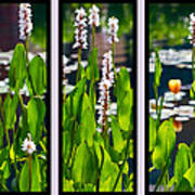 Triptych Of Water Hyacinth Art Print