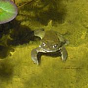 Troll's Toad Art Print