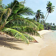 Tropical Island Art Print