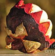 Tropical Mangosteen - The Medicinal Fruit Print by Kaye Menner