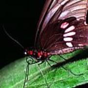 Tropical Rainforest Butterfly Art Print