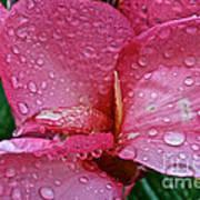 Tropical Rose Art Print by Susan Herber