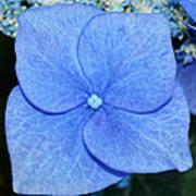 True Blue. Art Print