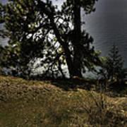 Tubbs Hill On Lake Cd'a Art Print