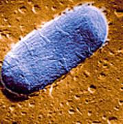 Tuberculosis Bacillum Art Print by Science Source