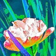 Tulip 45 Art Print