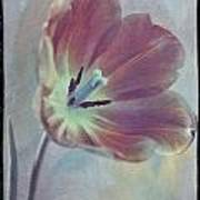 Tulip Adventure Art Print