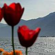 Tulip And Lake Art Print