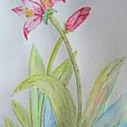 Tulip Duo II Art Print