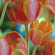 Tulip Fascination Art Print