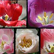 Tulip Sampler Art Print
