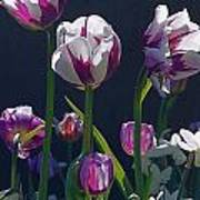 Tulip Springtime Memories Art Print