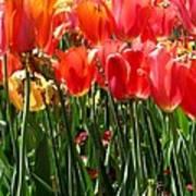 Tulip Uprising Art Print