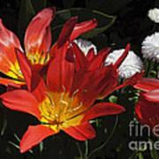 Tulips And Daisies Art Print