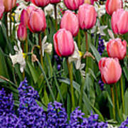 Tulips And Friends Art Print