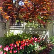 Tulips By Dappled Fence Art Print