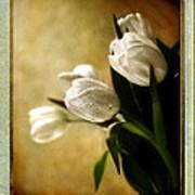 Tulips Side Sepia Art Print