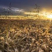 Tumble Wheat Art Print