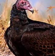 Turkey Vulture Art Print