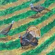 Turkeys In Field Art Print