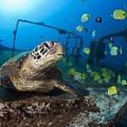 Turtle And Sealife Art Print