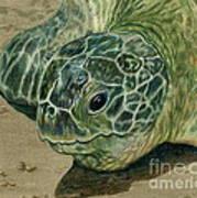 Turtle Beach Art Print