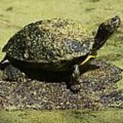 Turtle Camouflage Art Print