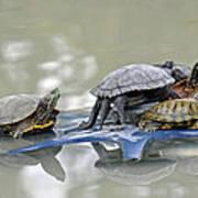 Turtle Pileup Art Print