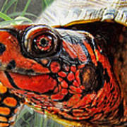 Turtle Smile Art Print
