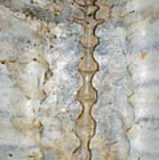 Turtle Spine Art Print